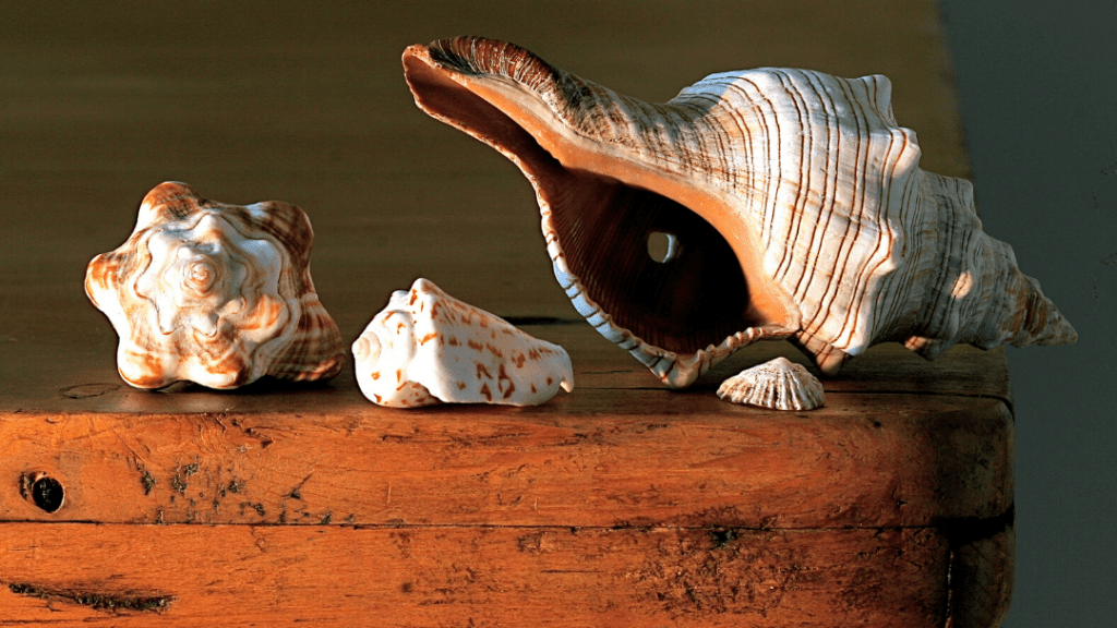 Sea Witches Create Sigils on Shells